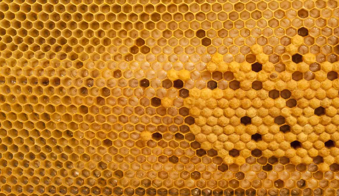 bee honeycomb symbolising democratic approach to workplace adjustments